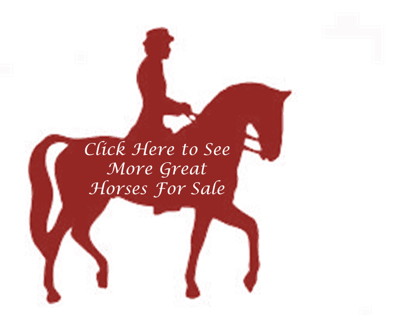 More Horses for Sale